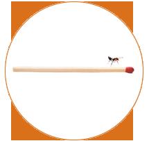 fourmi acrobate